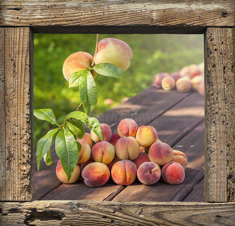 Fresh peaches on garden table in wooden frame background. royalty free stock images