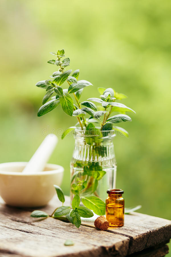 Fresh peppermint and peppermint oil. royalty free stock image