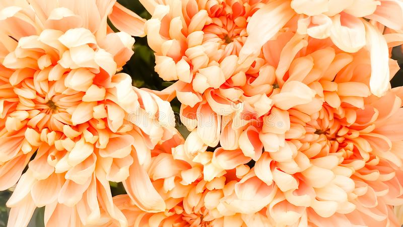 Fresh petals beautiful colorful vintage flowers background stock photos