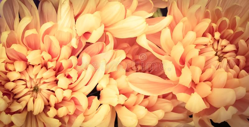 Fresh petals beautiful colorful vintage flowers background royalty free stock photo