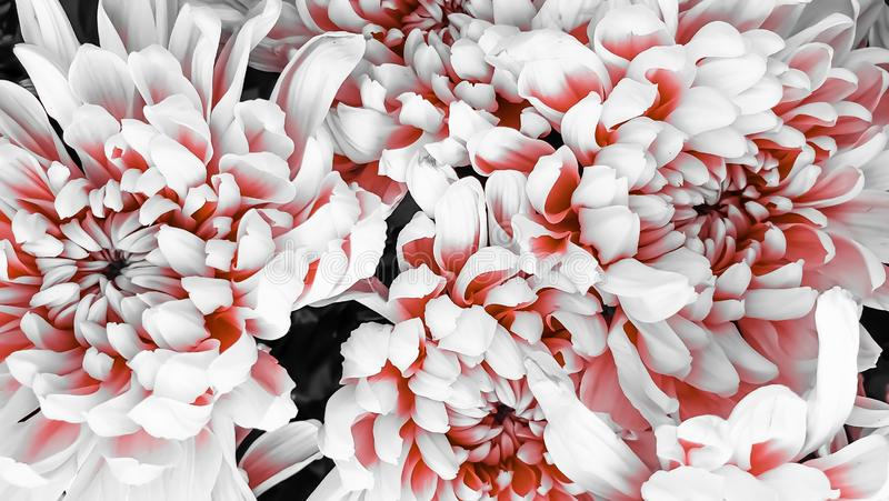 Fresh petals beautiful colorful vintage flowers background stock image