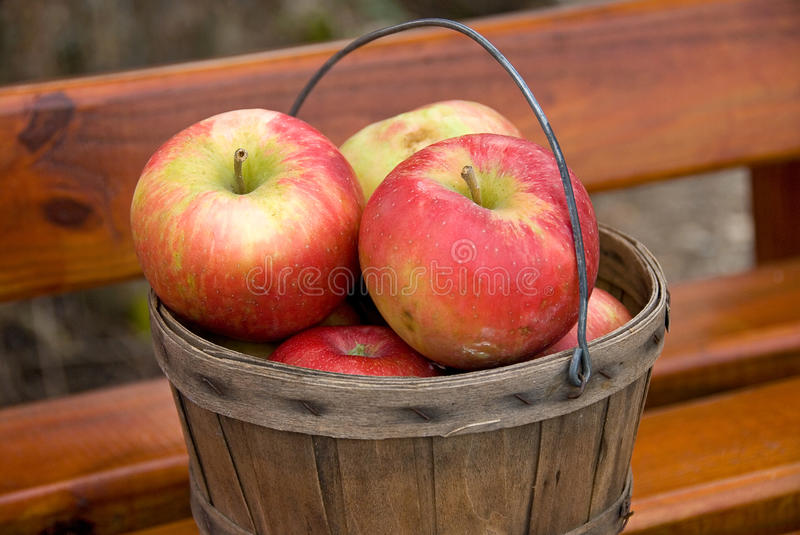 Fresh Picked Apples stock photos