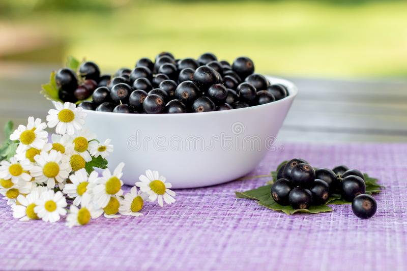Fresh picked black currant berries and camomile flowers on a table outdoors in the garden, summer farm food, vitamins and harvest. Concept royalty free stock photo