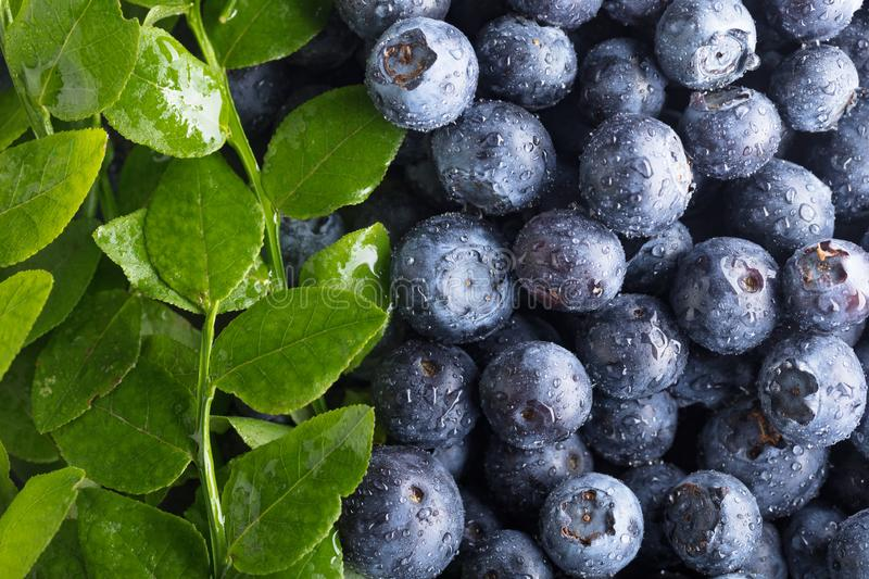 Fresh picked blueberries with water drops stock photos