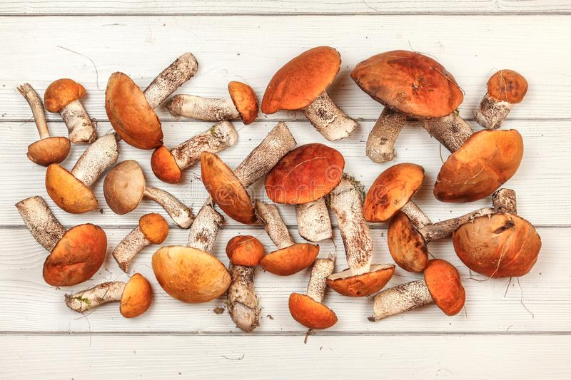 Fresh picked forest mushrooms, red-capped scaber stalk variety Leccinum aurantiacum / albostipitatum, on white boards desk,. Photo from above royalty free stock photography