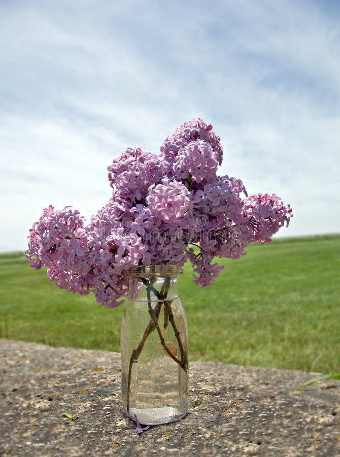 Fresh Picked Lilacs in a Bottle. Fresh picked lilacs on an old stone wall in the country stock images