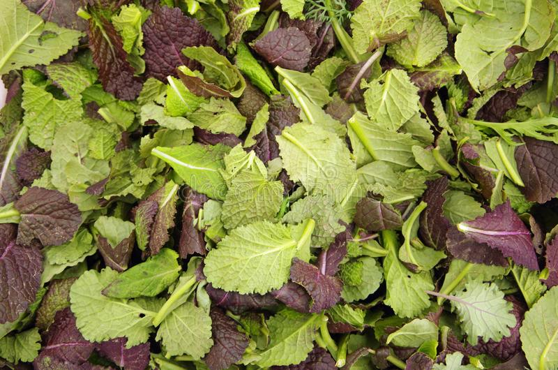 Fresh picked mixed mustard green leaves stock photo