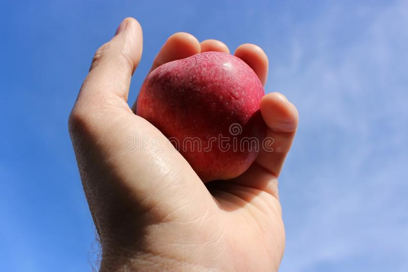 Fresh picked ripe red apple straight from the tree held up against a blue sky. A fresh picked red apple straight off the apple tree held up against a blue sky stock images