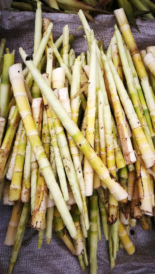Fresh Pickled Bamboo Shoots. With mud.Bamboo shoots or bamboo sprouts are the edible shoots new bamboo culms that come out of the ground of many bamboo species stock images