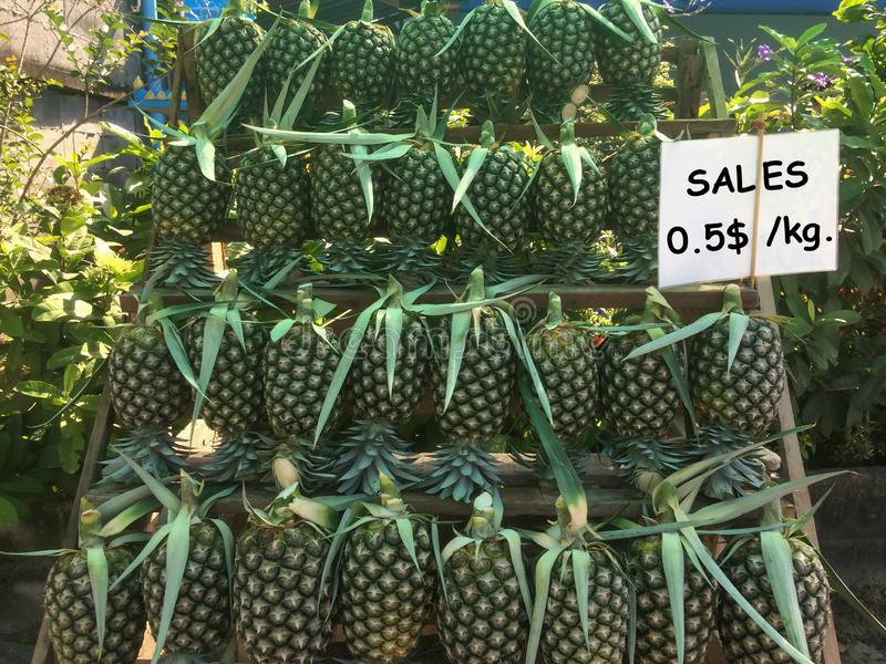 Fresh pineapple collected from the garden. royalty free stock photos