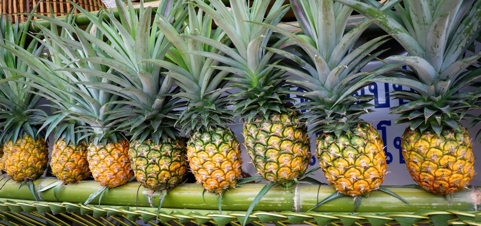 Fresh pineapple. From farm in thailand stock photography