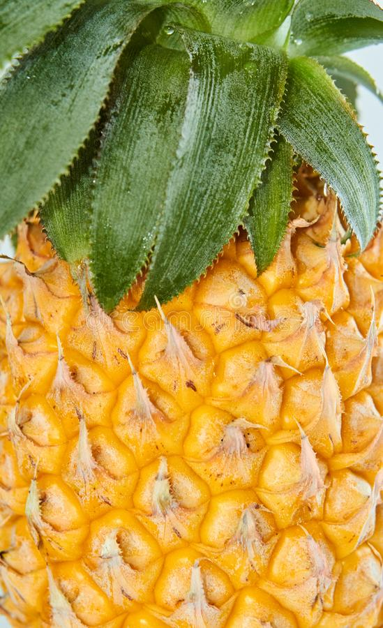 Fresh pineapple with green leaves stock image