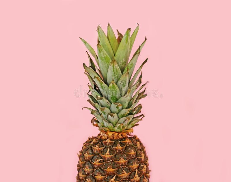 Fresh pineapple isolated on pink background - exotic fruit. Still life food photography stock photography