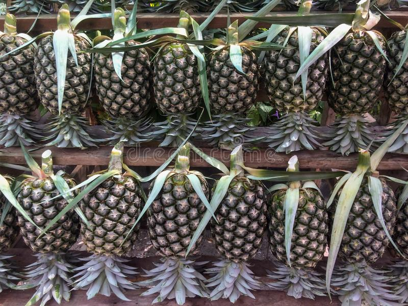 Fresh pineapple for sale. royalty free stock image