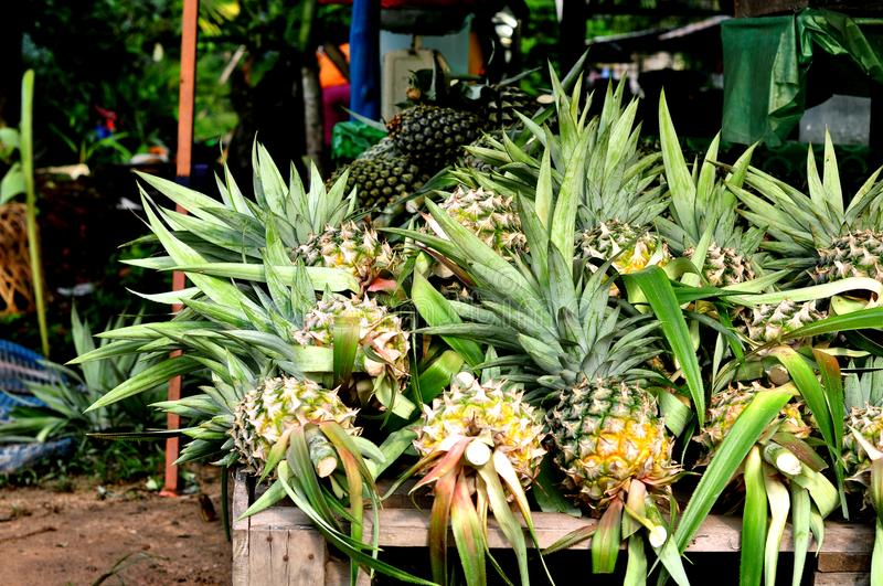 Fresh Pineapples At The Markets stock images