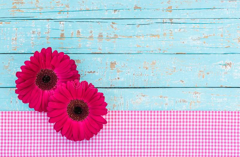 Greeting or gift card with dark pink gerbera daisy flowers on light blue vintage wood background stock image