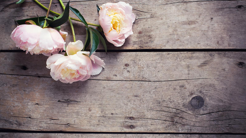 Fresh pink peonies flowers on aged wooden background. Flat lay. royalty free stock photography