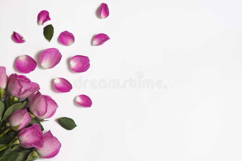 Pink roses, rose petals and green leaves on a white background royalty free stock photo