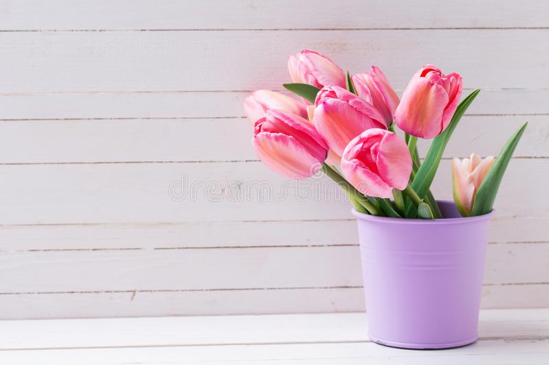 Fresh pink tulip flowers in violet bucket on white wooden bac. Kground. Floral still life. Selective focus. Place for text stock photo