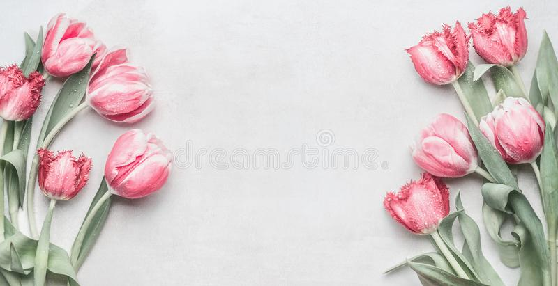 Fresh pink tulips banner with copy space. royalty free stock photos