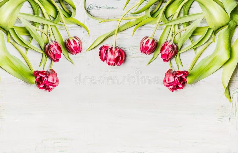 Fresh pink tulips , flowers border on white wooden background,border stock photography