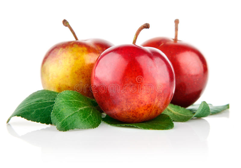 Fresh plum fruits with green leaves royalty free stock image