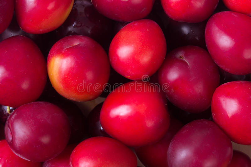 Fresh plum fruits. Ripe fruit fresh plums, close up photo royalty free stock image