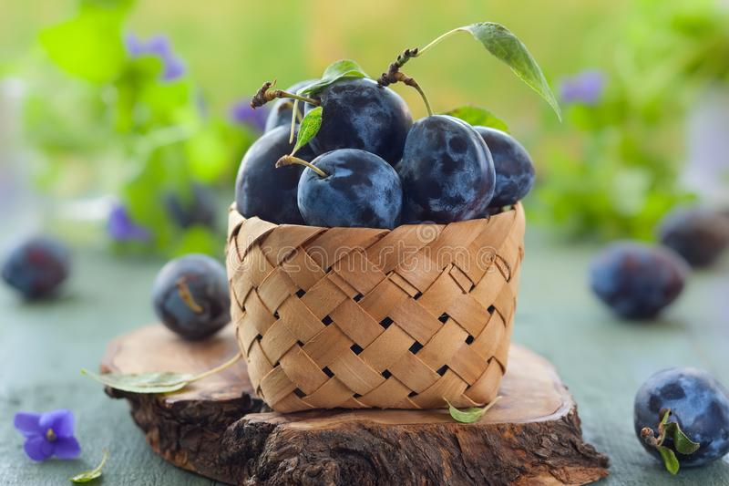Fresh plums with leaves. In basket on wooden background stock images