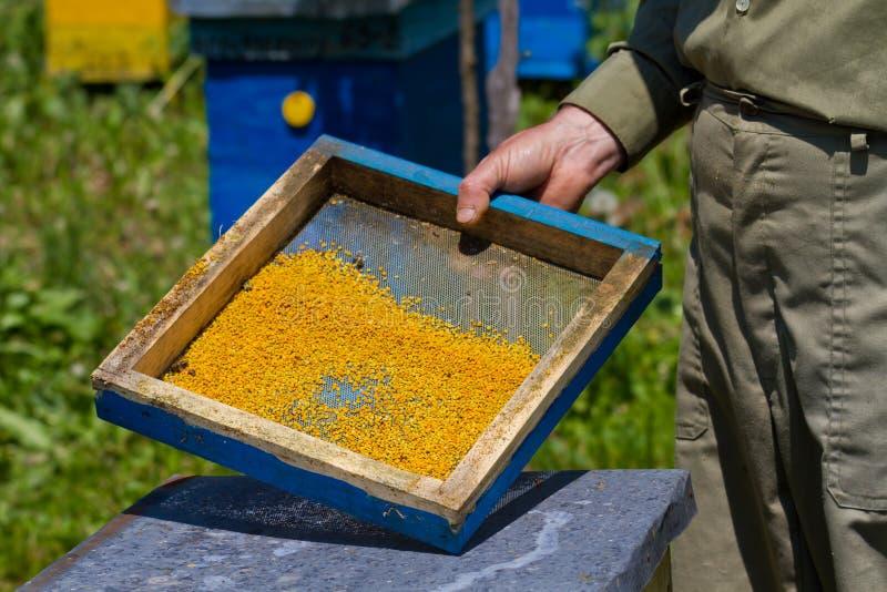 Fresh Pollen Stock Photo
