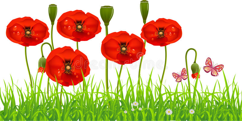 Fresh Poppy lawn. With green grass and butterflies. Spring Summer background stock illustration