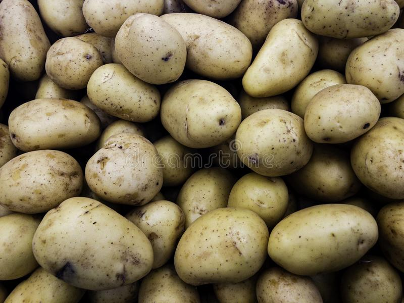 Fresh potato close up at the village market.  stock images
