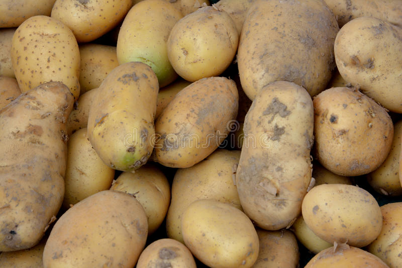 Download Fresh potato stock photo. Image of objective, nutrition - 31687106