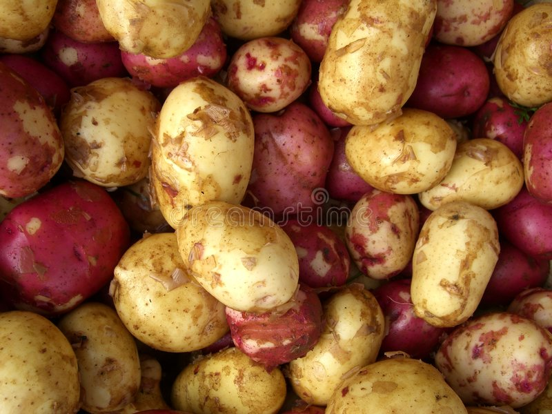 Fresh Potatoes Royalty Free Stock Photos