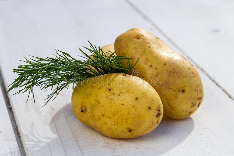 Fresh potatoes and dill stock images