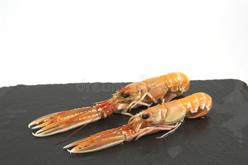 Fresh prawns on a black board. stock photo