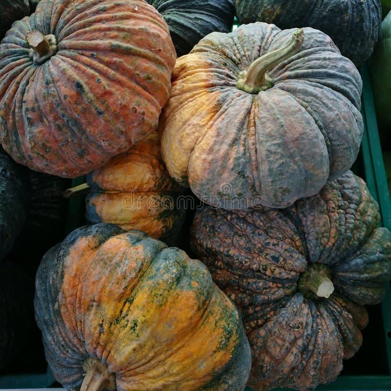 Fresh pumpkin stock photography