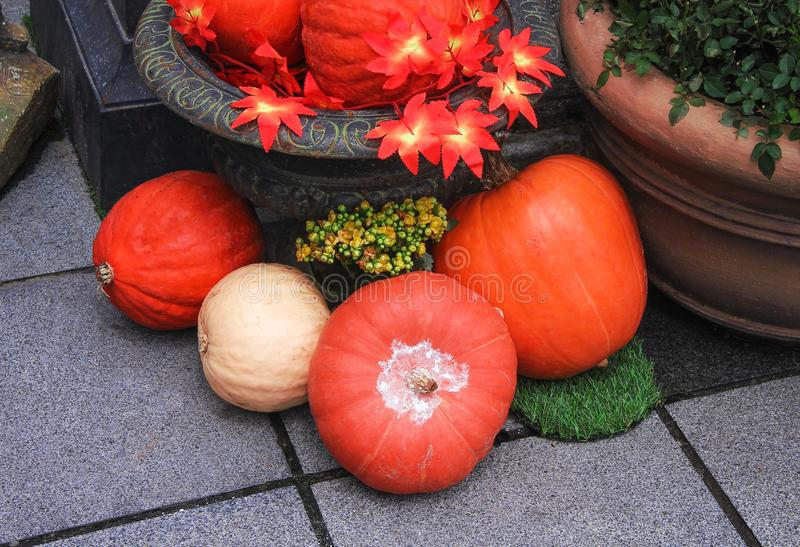 Fresh pumpkins group decoration in garden  for thanksgiving day or halloween background. Close up Fresh pumpkins group decoration in garden  for thanksgiving day royalty free stock photos