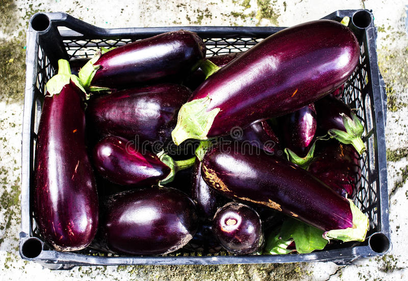 Fresh Purple Eggplants from market as food background. Top view stock images
