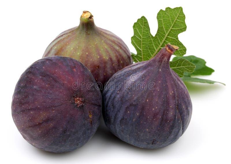 Fresh purple fig fruit and slice isolated on white stock photos