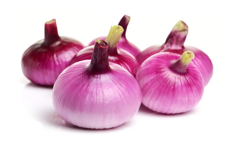 Fresh purple onion royalty free stock image