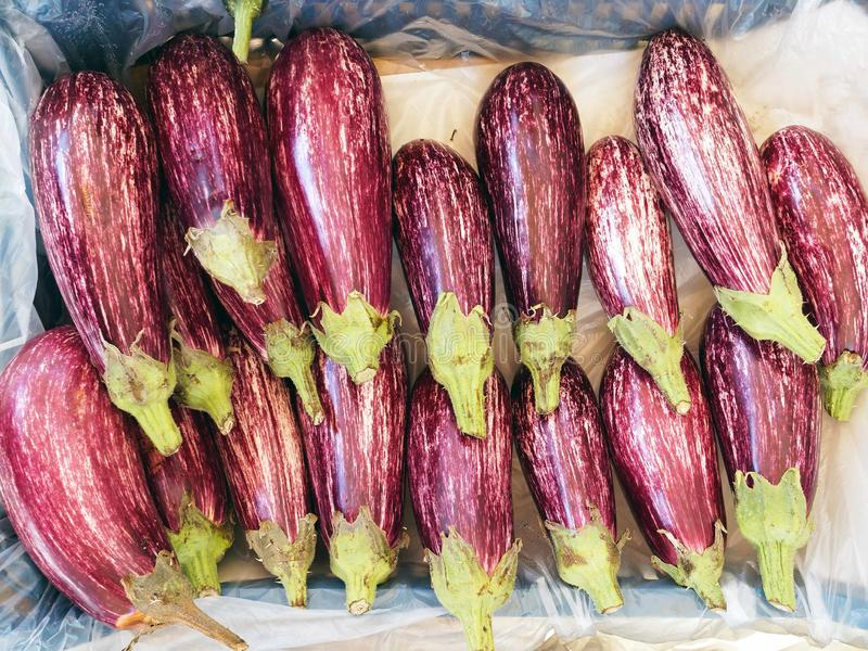 Fresh Purple Striped Eggplants in Fruit and Vegetable Shop stock photo