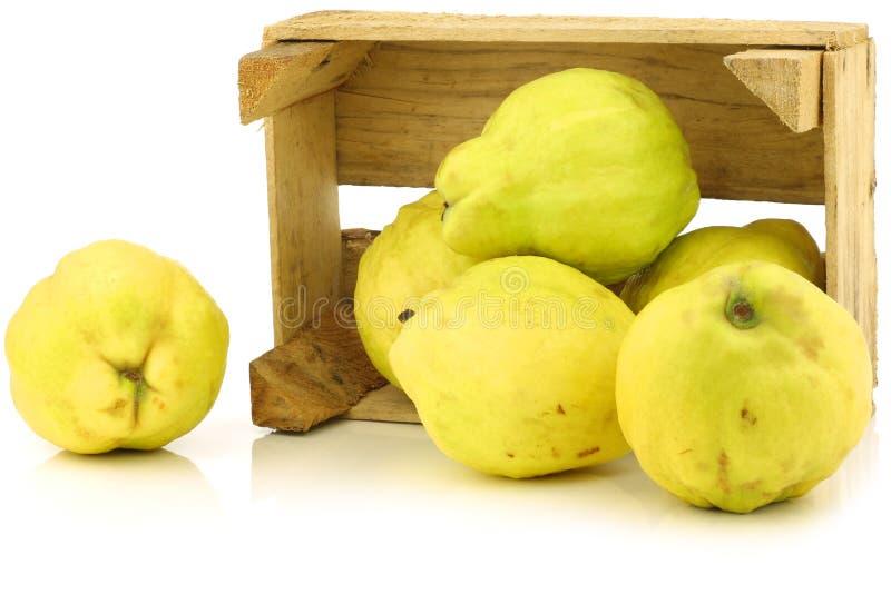 Fresh quince fruits Cydonia oblonga royalty free stock photos