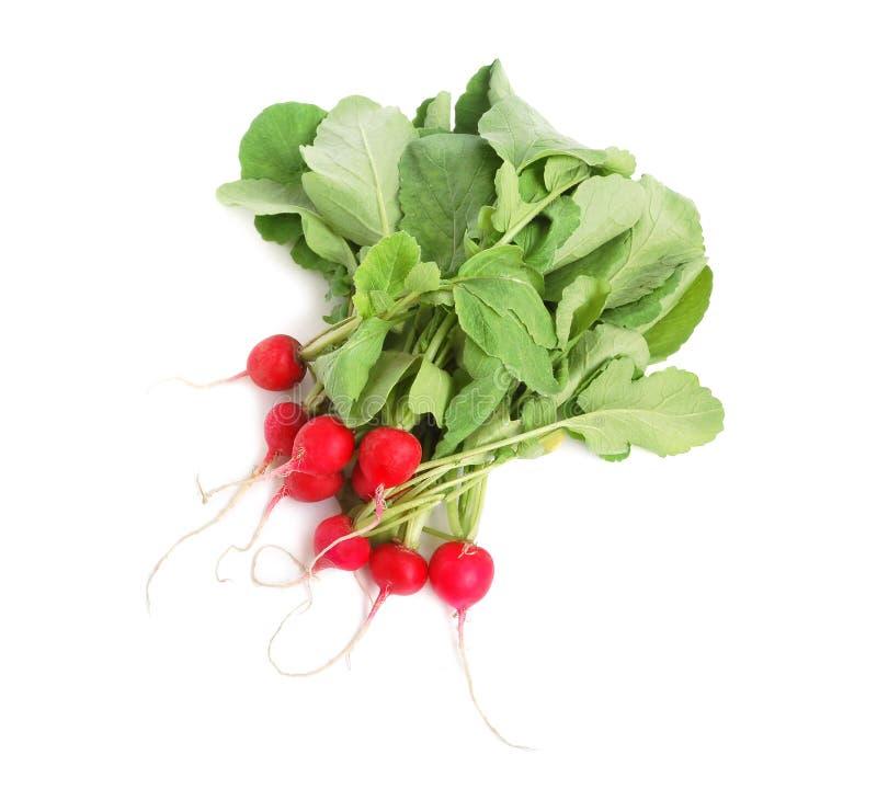 Fresh radish stock photos