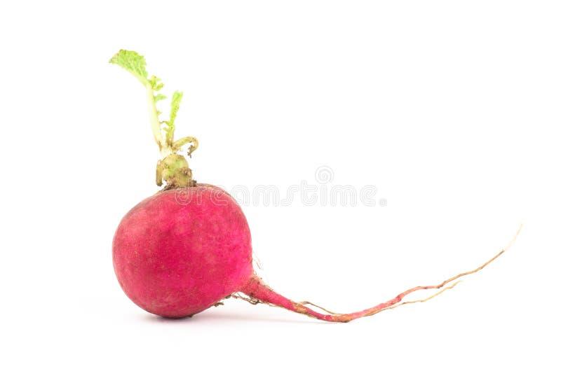 Download Fresh radish stock photo. Image of pungent, rough, radish - 43078704