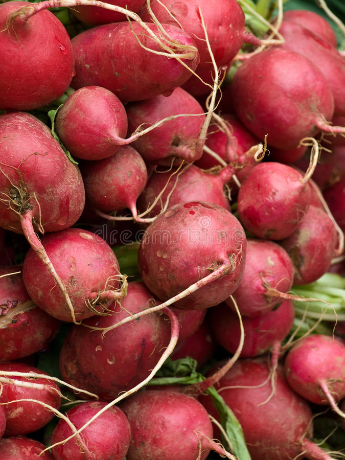 Free Fresh Radishes Stock Photos - 14317453