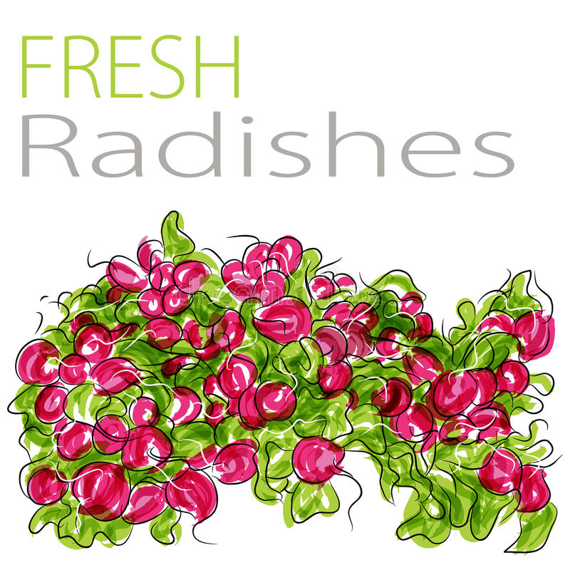 Download Fresh Radishes stock vector. Image of clip, bushel, pile - 23483543
