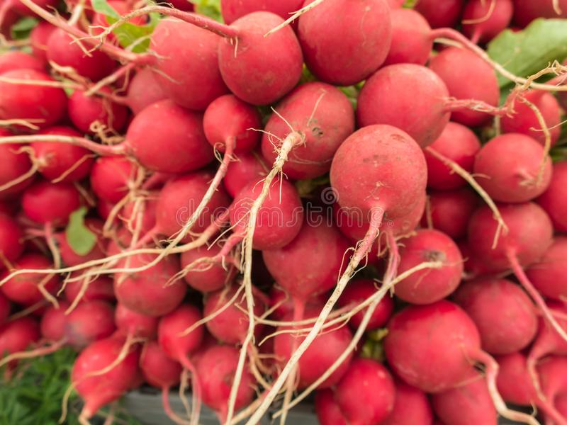 Fresh radishes for sale. Fresh organic radishes at the farmers market stock photos