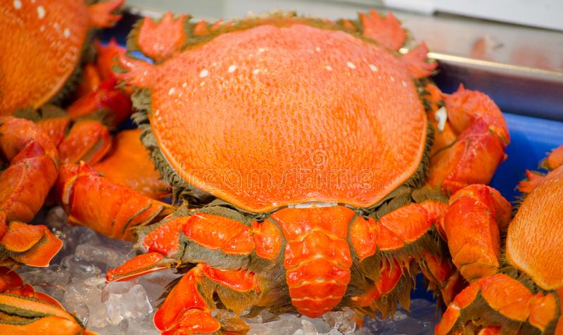 Fresh Ranina ranina or spanner crab on the ice at a fish market. stock image