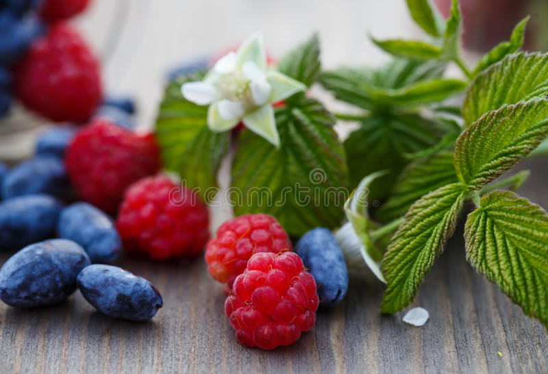 Fresh raspberries and mulberries on a wooden table. And a sprig with leaves and raspberry flower royalty free stock photos