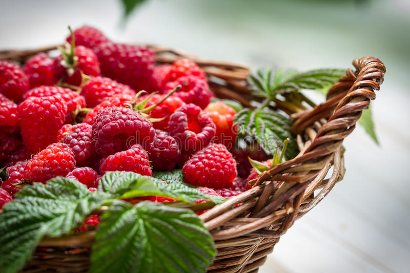 Fresh raspberries in a small wicker basket royalty free stock image
